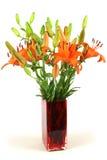 Lelie van bloem Stock Foto