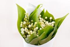 Lelie-van-de-vallei bloemen Royalty-vrije Stock Foto's