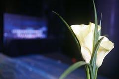 Leliebloem in dicht geschoten licht Royalty-vrije Stock Afbeelding
