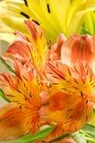 Lelies. stock afbeeldingen