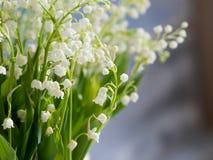 Lelies in een witte rieten mand Verse de lentebloemen als gift Vrije ruimte op het recht voor tekst of ontwerp Stock Afbeelding