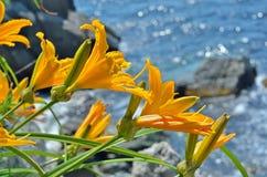 Lelies op zee 10 Stock Afbeeldingen