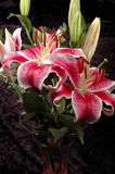 Lelies in vaas royalty-vrije stock afbeeldingen