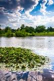 Leliestootkussens in de vijver in Patterson Park in Baltimore, Maryland Stock Afbeeldingen