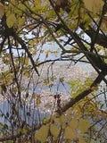 Leliestootkussens op het water royalty-vrije stock fotografie