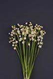 Lelietje-van-dalen (Convallaria Majalis) op donker grijs wordt geïsoleerd dat Stock Afbeeldingen