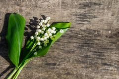 Lelietje-van-dalenbloemen op houten achtergrond Royalty-vrije Stock Foto's