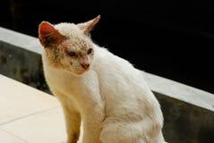 Lelijke kat met huidziekte Royalty-vrije Stock Foto's