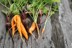 Lelijke wortel en bieten stock foto