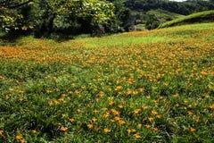 lelui karciani tło kwiaty wzywają szablonu cechy ogólnej sieć Fotografia Stock