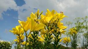 Lelui nieba kwiaty Czasu upływ 15 zdjęcie wideo