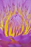 lelui pollen woda Obrazy Stock