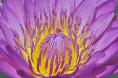 lelui pollen woda Zdjęcie Stock