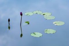 lelui purpurowa odbicia woda Zdjęcia Royalty Free