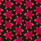 Lelui rewolucjonistki wzór bezszwowy piękny kwiat tło Zdjęcia Royalty Free
