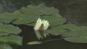 lelui stawu wody biel zdjęcie wideo