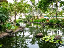 lelui tropikalny stawowy zdjęcie royalty free