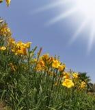 leluj pomarańczowy wiosna kolor żółty Obrazy Royalty Free