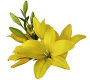 Leluja żółci kwiaty na białym tle, odizolowywającym z ścinek ścieżką piękny bukiet leluje z zielonymi liśćmi, dla Fotografia Stock