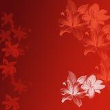 Leluja czerwony kwiat Fotografia Royalty Free