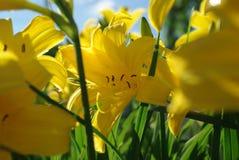 Leluja kolor żółty pod światłem słonecznym zdjęcie stock