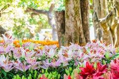 Leluja kwiatów bukiet Zdjęcie Royalty Free