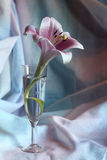 Leluja kwiat w szkle Obraz Royalty Free