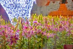 Leluja kwiatu noc w Tajlandia Fotografia Stock