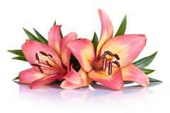 Leluja kwiaty zdjęcie stock