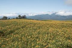 Leluja kwitnie wszędzie na szczycie górskim zdjęcia stock