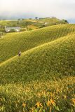 Leluja kwitnie wszędzie w szczycie górskim zdjęcia royalty free
