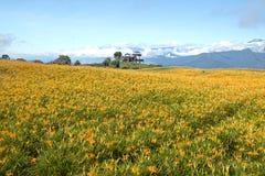 Leluja kwitnie wszędzie w szczycie górskim fotografia royalty free