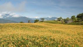 Leluja kwitnie wszędzie w szczycie górskim obrazy stock