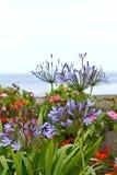 Leluja Nil kwitnie w ogródzie Zdjęcia Royalty Free