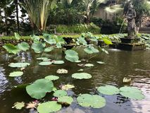 Leluja ochraniacze w Bali Zdjęcia Royalty Free