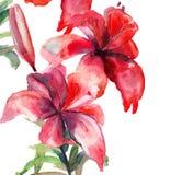 Leluja piękni kwiaty Obrazy Stock