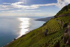 Leman Lake. Vinhedo do terraço na região de Lavaux, Suíça foto de stock royalty free