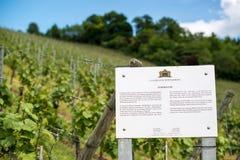 Lemberger grapes vineyard Royalty Free Stock Photos