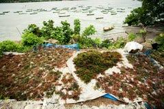 Lembongan - 5 de enero: La alga marina se seca en la costa, el 5 de enero Fotos de archivo libres de regalías
