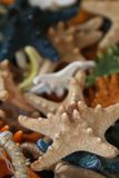 Lembranças coloridos da estrela do mar Imagem de Stock