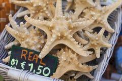 Lembranças da estrela do mar e das conchas do mar para a venda Fotografia de Stock