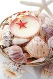 Lembranças da estrela do mar e do seashell imagens de stock royalty free