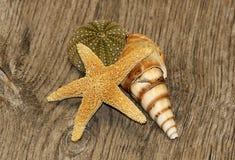 Lembranças do beira-mar Imagens de Stock