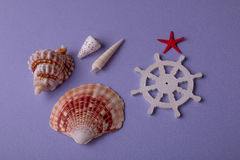 Lembranças do mar do verão Imagens de Stock