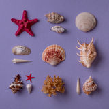 Lembranças marinhas Formato quadrado Imagens de Stock Royalty Free