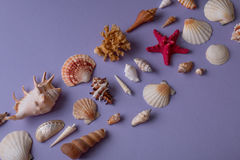 Lembranças marinhas no fundo roxo Imagem de Stock Royalty Free