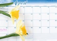 Lembrete do feriado da Páscoa marcado no calendário com narcisos amarelos amarelos imagens de stock