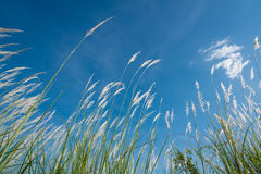 Lemmanote der Wind Lizenzfreies Stockfoto