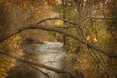 Lemmar av ett träd över en liten vik i nedgången Royaltyfri Fotografi