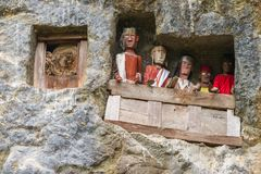 Lemo, Indonesia - september 5, 2014: famous burial site with coffins placed in caves carved into the rock, guarded by the statues. Of the dead persons called royalty free stock photography